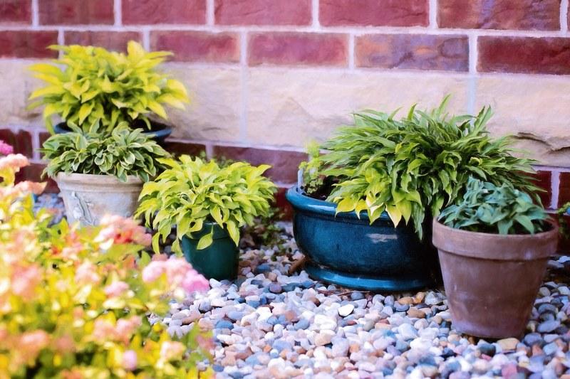 piante-vaso-outdoor